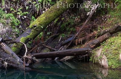 Portola State Park, California 1203P-LT1