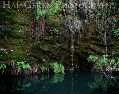 Stream Grotto Portola State Park, California 1203P-G3