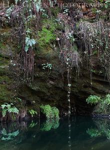Portola State Park, California 1203P-G4
