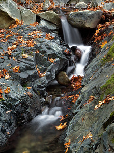 Uvas Canyon Morgan Hill, California 1110U-S15