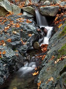 Uvas Canyon Morgan Hill, California 1110U-S15