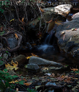 Uvas Canyon Morgan Hill, California 1110U-S7