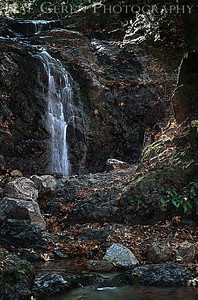 Uvas Canyon Morgan Hill, California 1110U-FH1E2