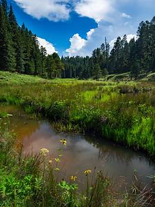 Turkey Creek, Mogollon Rim