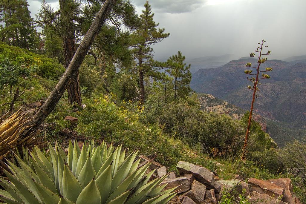 Incoming Storm, Sierra Ancha Wilderness