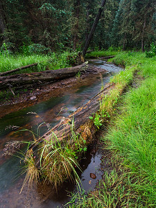 West Fork Little Colorado River