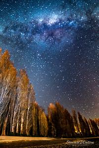 Wanaka poplars under the stars