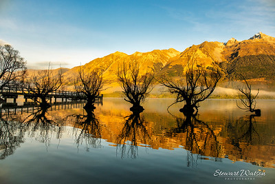 Famous willow trees growing out of the water