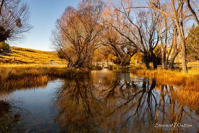 Willow tree reflections at Lake Alexandrina