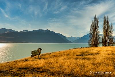 This boy loved having his photo taken on the shores of Lake Tekapo