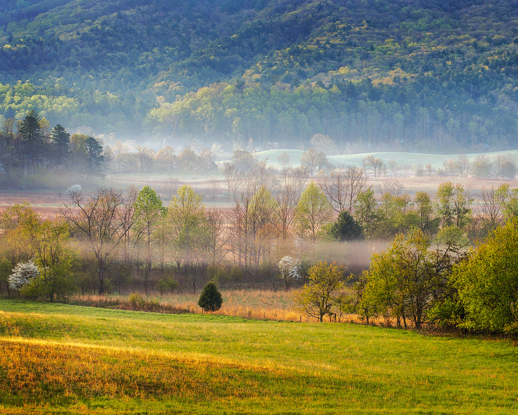 Spring Morning at Cades Cove