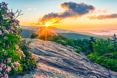 Mountain Laurel Sunrise