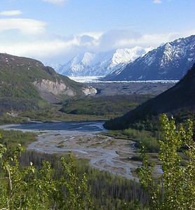 Upper reaches of the Matanuska Glacier as viewed from the east side of Caribou Creek.