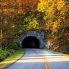 Tunnel Through Autumn