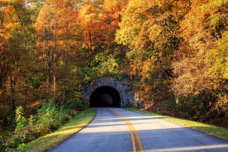 Tunnel Through Autumn (Landscape)
