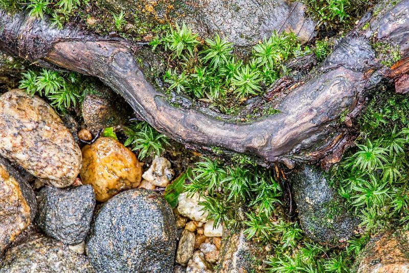 Nature's Still Life