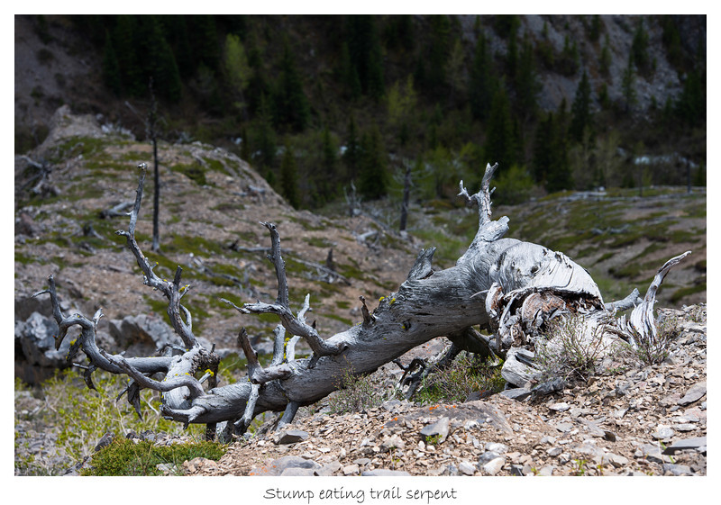 Stump eating trail serpent
