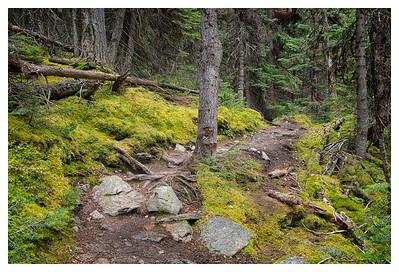 Opabin West trail