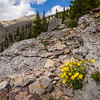 Wildflowers and the distant summit.