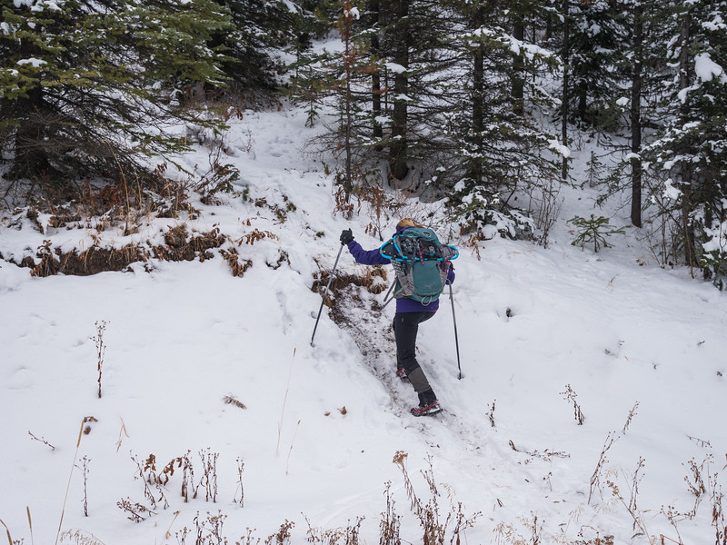 After hiking along the x-country ski trails, we turned into the trees.. we were following some tracks that were set by some hikers the day before.