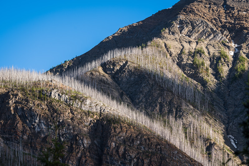 We stayed in Marble Canyon campground on Thursday night, the sun lighting up the shoulder of Vermilion peak and all the burned up trees.