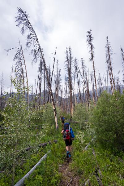 Walking along a pretty good path through the burn.