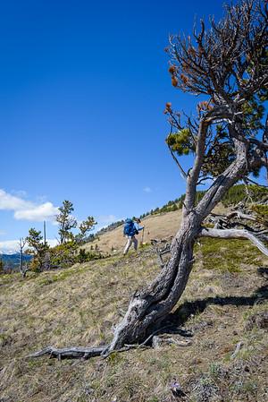 Dragan climbing the hill