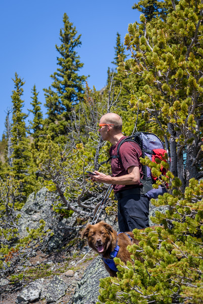the ridge we were following filled in with trees, we picked routes to avoid snow on the ground. Jamie can't stop looking at Holy Cross and Mt Head wishing he was skiing instead of hiking the foothills.