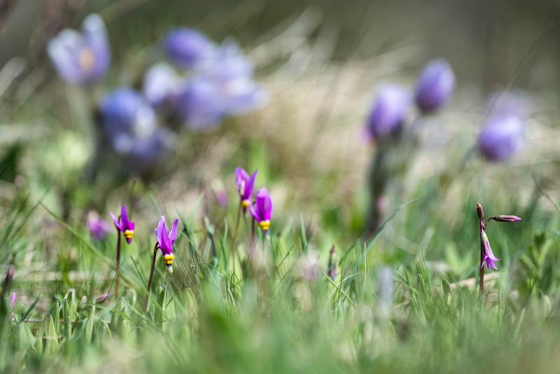 Some spring flowers along the trail