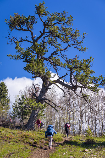 magnificent tree at the gateway to the loop we were attempting.
