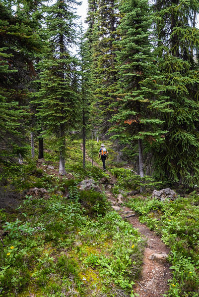 Into some alpine forest.. everything was lush and green.. no larches though.
