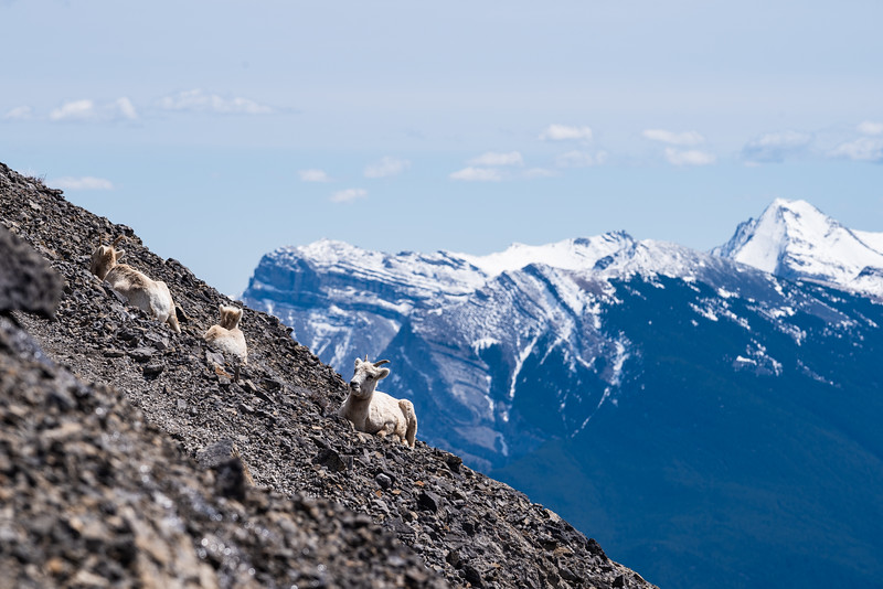Some sheep were lazing away on the upper slopes of EEoR