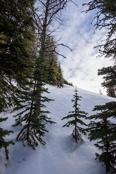Higher up, the terrain opens up a little. We skirt the edge of the snowpack along the trees.