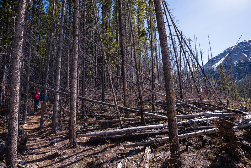Some deadfall from an old fire. From what I could find there were some perscribed burns here in 2011.