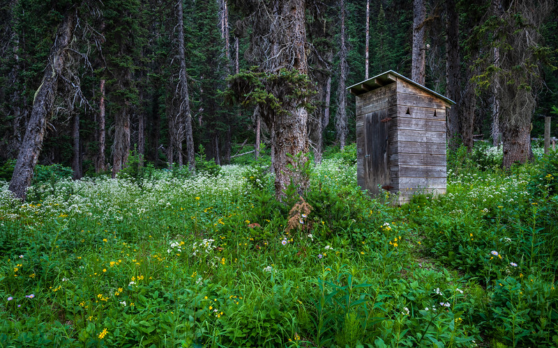 The KNP Helmet Creek Patrol Cabin outhouse is surrounded by wildflowers.