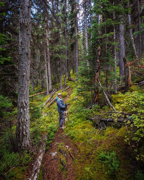 The forested trail was full of vibrant colours.