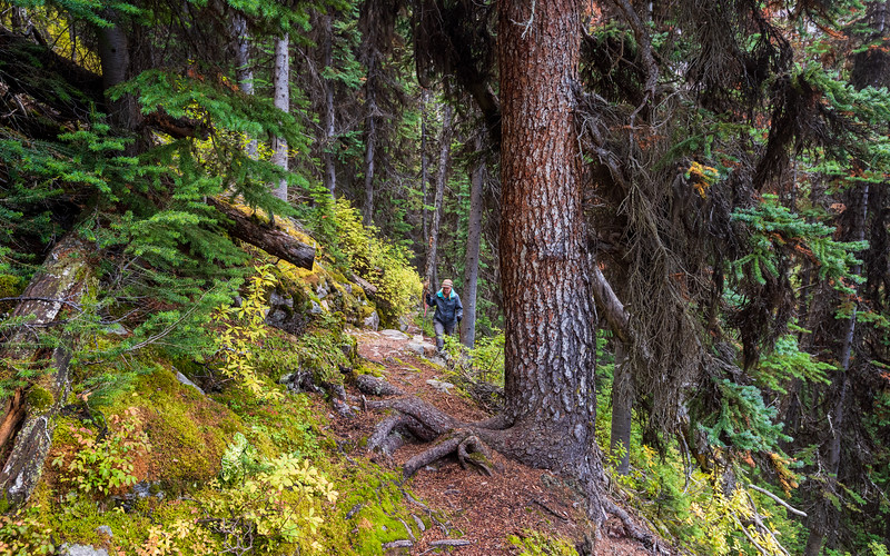 More forested trail on the route from Morning Glory lakes