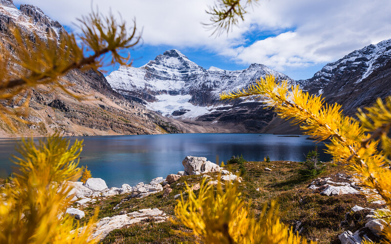 What would I see if I were a larch tree.. the lake stands before me.
