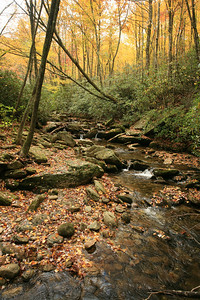 stream in fall - Parkway