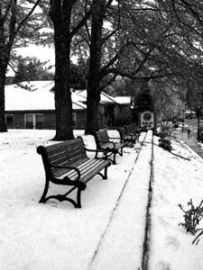 Benches in winter BW_fresco