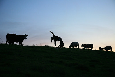 dancing with cows (2)