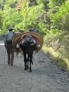 Trekking with Donkeys Aug 2015