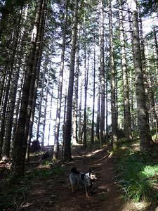 Bean (Russ's dog) enjoying the forest