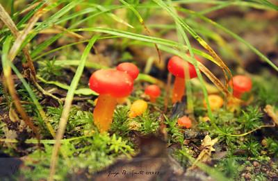 Little Reds