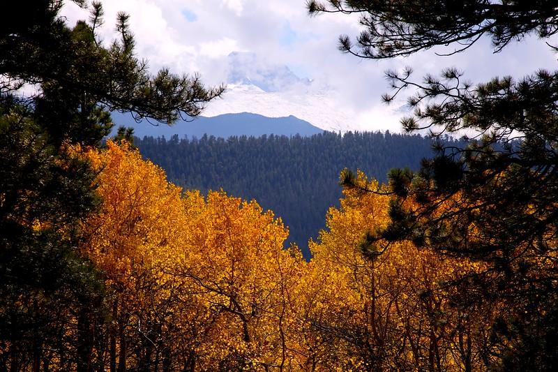 Fall Aspen and Shrouded Longs Peak