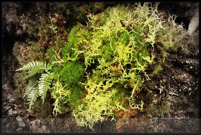 IMG_3416 mossy ferny rock
