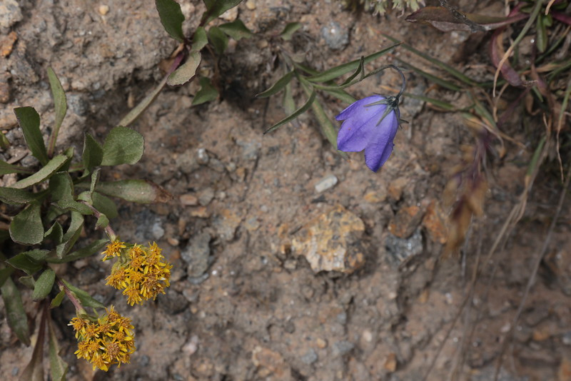 Final  Flowers in the High Country