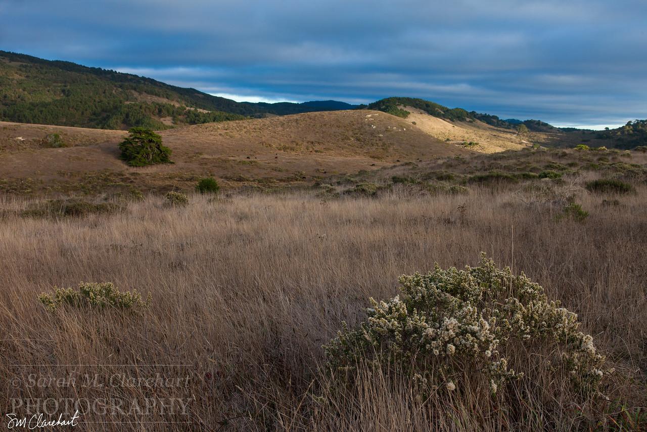 Estrero Trail III