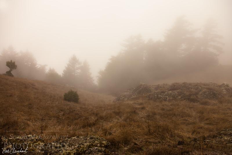 Foggy Mountain 4507