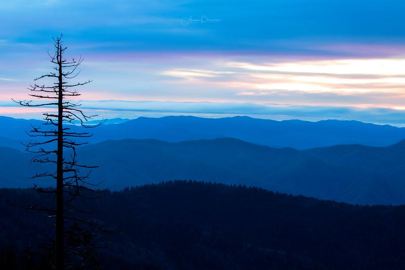 Lone Tree Sunrise at Clingman's Dome #33